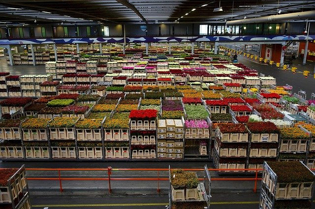 Large warehouse with containers of Dutch roses at the right time to rent a warehousing service.