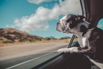 moving from Austin to San Antonio with pets and travelling by car