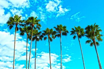 Palm trees and the sky you will enjoy after your relocation in Florida.