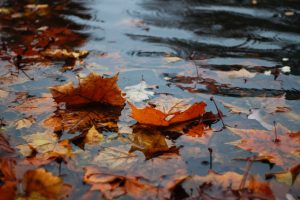 Some leaves in the rain.